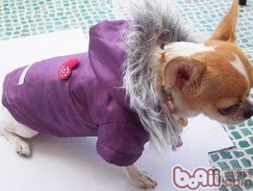 冬季带狗狗出行的注意事项-成犬饲养